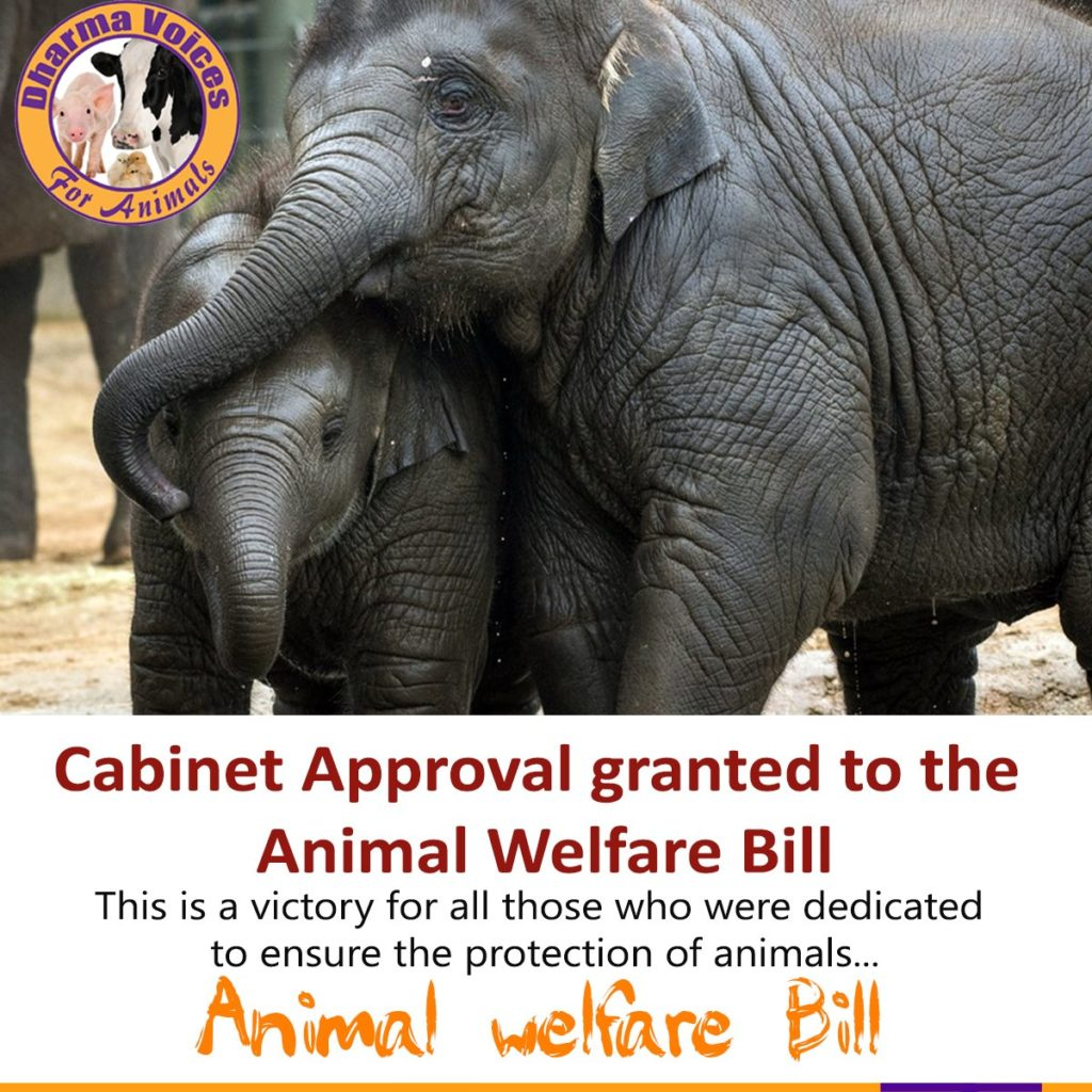 Cabinet Approval Granted to the Animal Welfare Bill