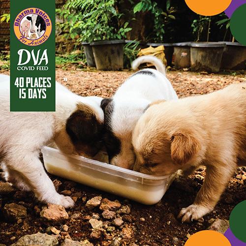 DVA Covid Dog Feed